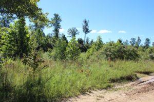 Goose Creek Estates Tract 15