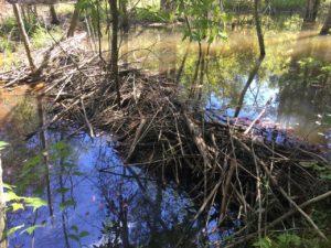 Goose Creek Estates Tract 29