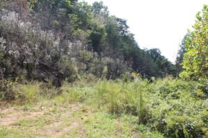 5 Acres For Sale In Sharps Chapel Tennessee
