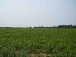 Owner Financed Land In SC
